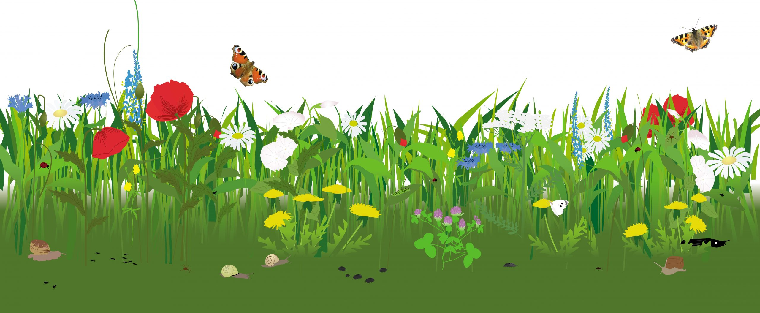 Blomster sommerfugle natur billede